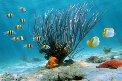 Dubrovnik Tours   Sea Kayaking & Snorkeling (without ...