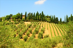 Tuscany | Italy | Chianti tour from Florence Chianti Tour San Gimignano guided tour Tour of Chianti small group Chianti tour