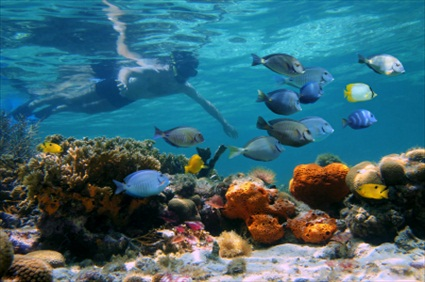 Cancun Tours Cavern Jungle Snorkeling In Cenotes From