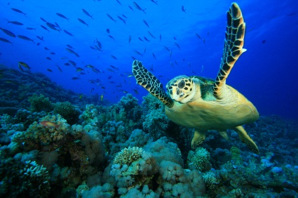 Los Cabos Tours Snorkeling Cruise Mexico Toursales Com