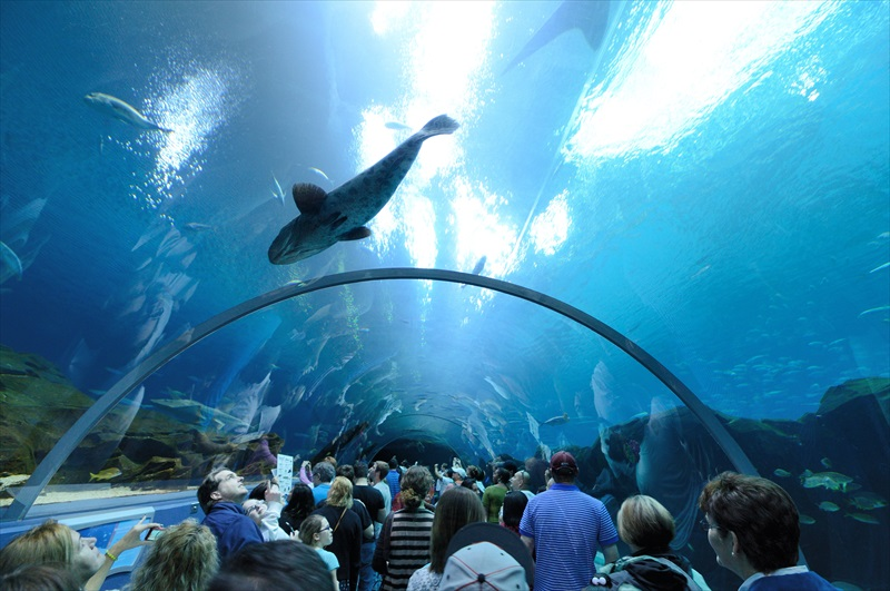 Georgia Aquarium is a nonprofit committed to inspiring awareness and preservation of our ocean and aquatic animals worldwide.