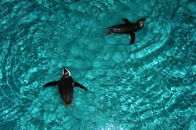 Boston aquarium webcam