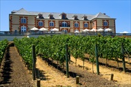 Photo of San Francisco | Napa and Sonoma Valleys Full Day Wine Tour from San Francisco