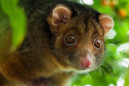 Australian Rainforest Locations Cairns Tours  Rainforest And Wildlife Tour  Australia