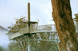 Hobart | Australia | Huon Valley Tour Tahune Forest Airwalk Huon River Valley Hobart tour