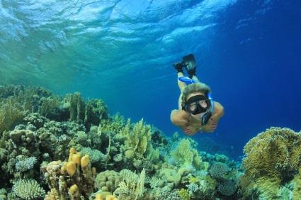Snorkeling Tours Near Miami