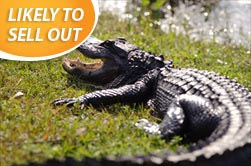 Photo of Miami | Biscayne Bay Sightseeing Cruise and Miami Everglades Airboat Tour