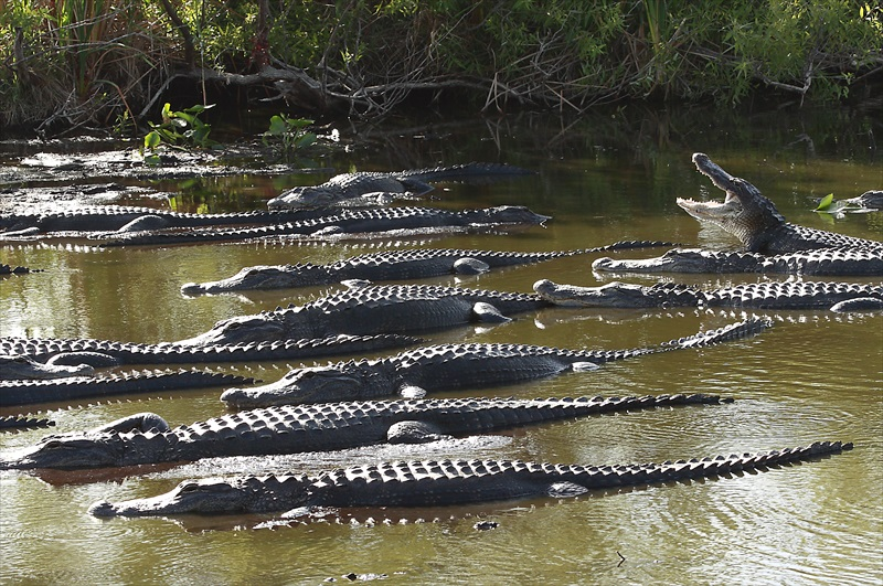 Miami Everglades Tour And Airboat Adventure With