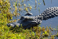 Photo of Miami | Miami City Sightseeing and Everglades Airboat Tour