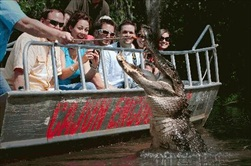 New Orleans | USA | New Orleans Swamp Tour New Orleans Swamp Day Tour New Orleans Honey Island Swamp Day Tour New Orleans Cajun Swamp Day Tour