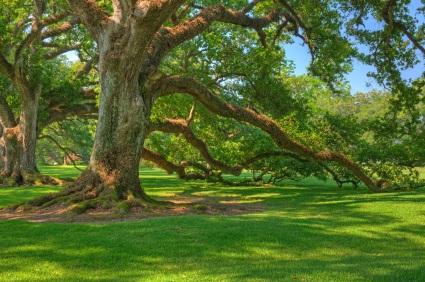 Tour Historic Oak Alley Plantation in New Orleans via Tour ...
