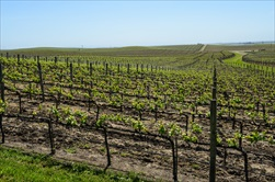 Photo of Napa & Sonoma | Horse and Carriage Wine Country Tour