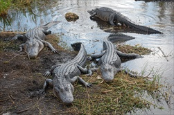 Wildlife Park Admission and 1 Hour Everglades Airboat Adventure