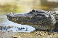 Photo of Orlando | Central Florida Everglades Airboat Adventure with Transport