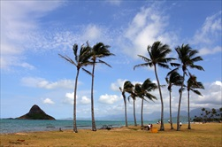 Photo of Honolulu | Best of Oahu Tour