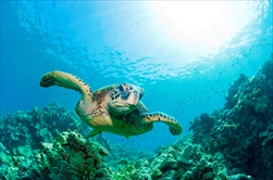 Photo of Honolulu | Oahu Turtle Snorkel