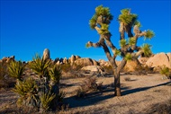 Photo of Palm Springs | Joshua Tree National Park Tour
