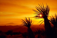 Photo of Palm Springs | San Andreas Fault Evening Jeep with Stargazing Small Group Tour