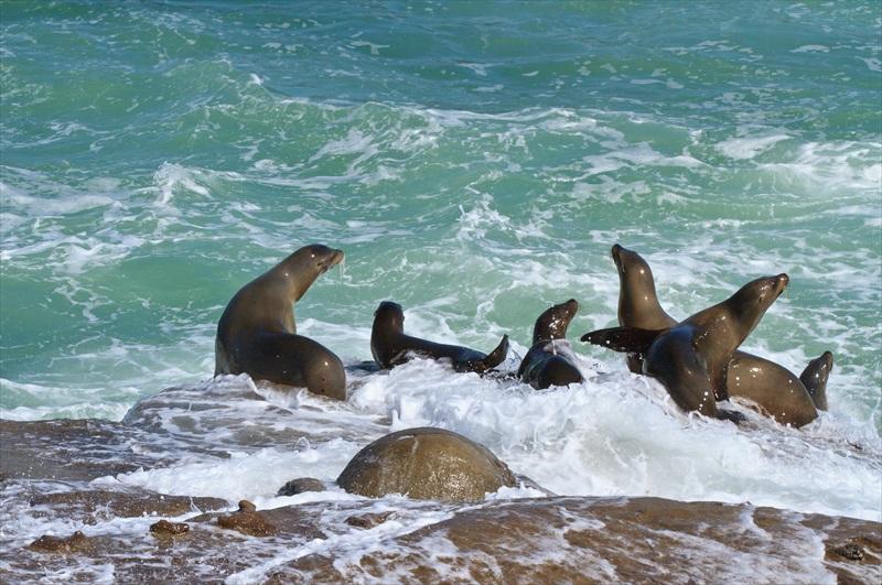 205585 10151575536223972 1120527648 N This Sea Lion