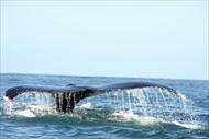 Photo of San Diego | Whale Watching Cruise of San Diego