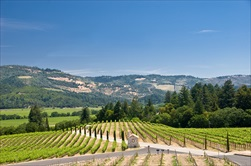 Photo of San Francisco | Sonoma Valley Half Day Wine Tour from San Francisco