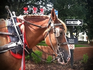 Photo of Savannah | Historic Carriage Tour